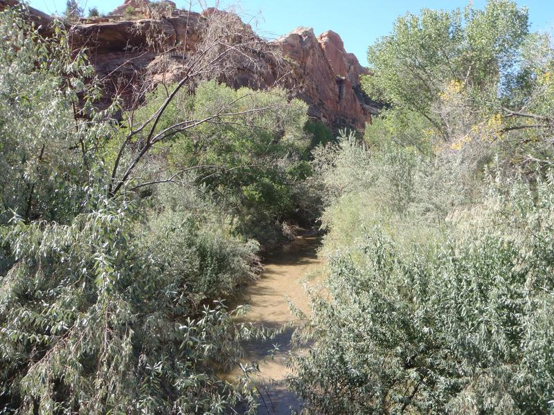 Russian olive trees line hiking trails